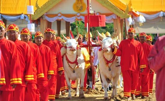 Chia sẻ kinh nghiệm hữu ích về tour du lịch Thái Lan tháng 5/2019 Lễ cày Hoàng gia tại Thái Lan