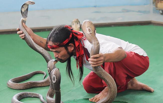 Trung tâm nghiên cứu rắn độc Hoàng gia